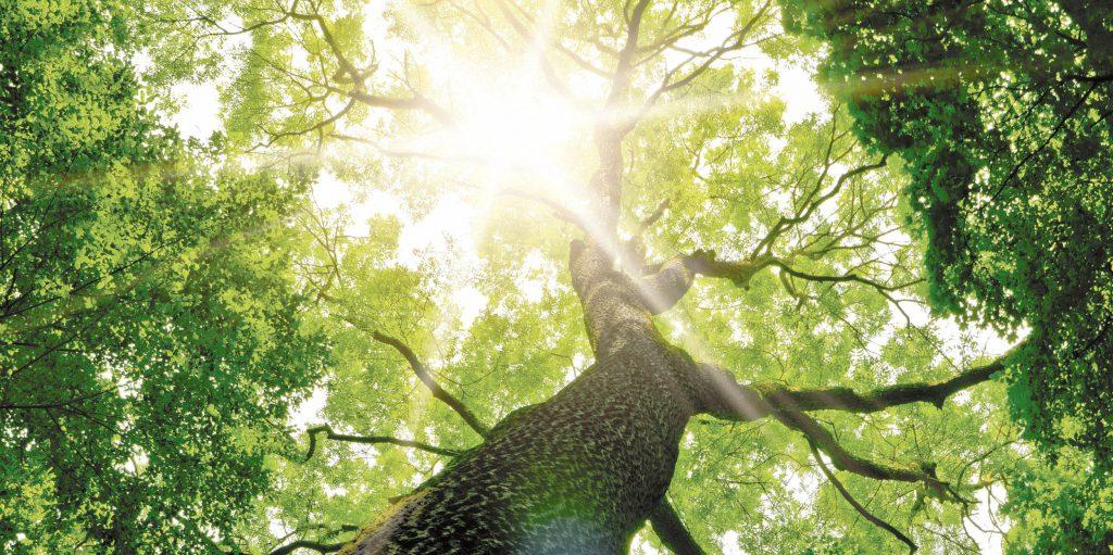 Photo d'arbre. Conseils pour bien débuter la sylvothérapie, avec le livre Sylvothérapie : le vpouvoir bienfaisant des arbres, de Jean-Marie Defossez