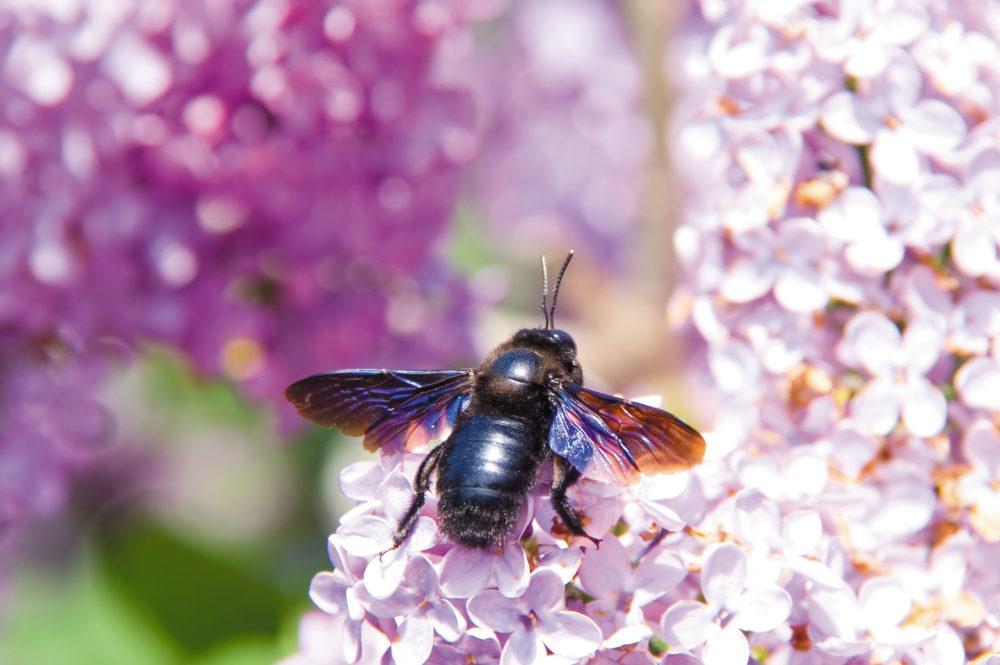 Accueillir les insectes dans mon jardin